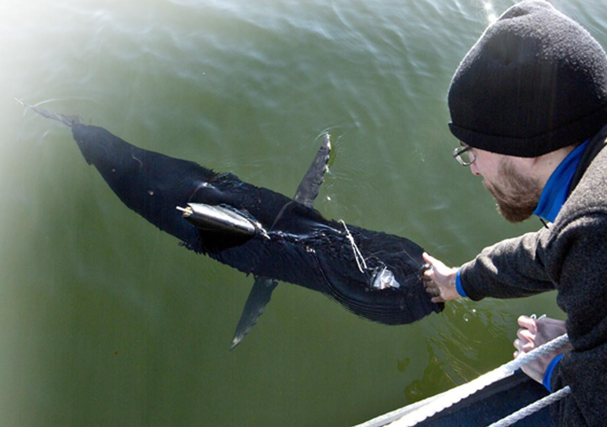 Рыба-робот на вооружении ВМС США